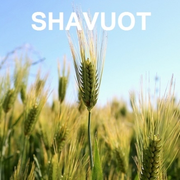 Shavuot – Festival of the Harvests